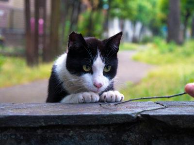 オーダーメイド猫脱走防止柵のコスパが良い理由