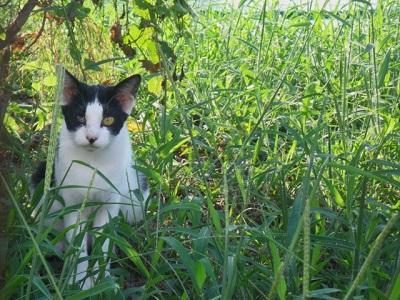 「愛猫が脱走!」効果的な捜索のポイント5つを紹介