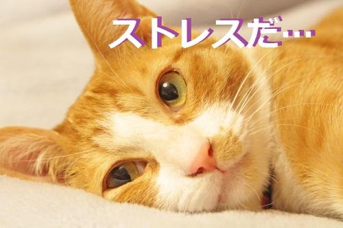 家の中でできる!猫のストレス解消法とおすすめグッズ