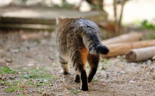 【えっ!】猫はある日突然いなくなる!?