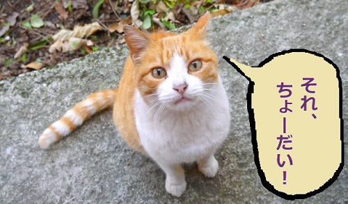 猫が中毒を起こす物質・食べ物編
